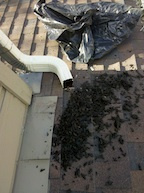 Denver Gutter Cleaning Debris at the end of a downspout after being cleaned